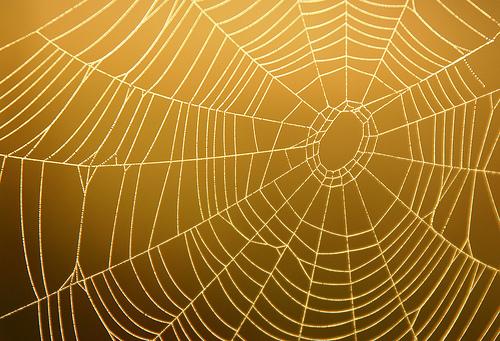 Spiderweb9