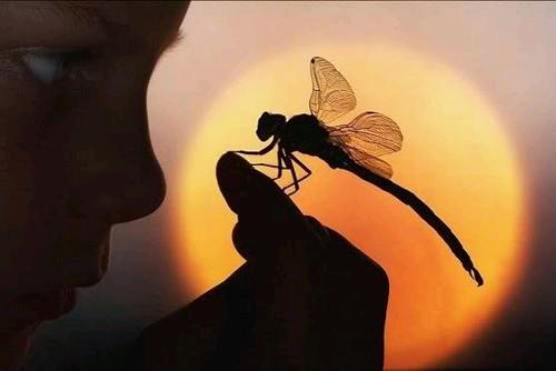 DragonflyWEB